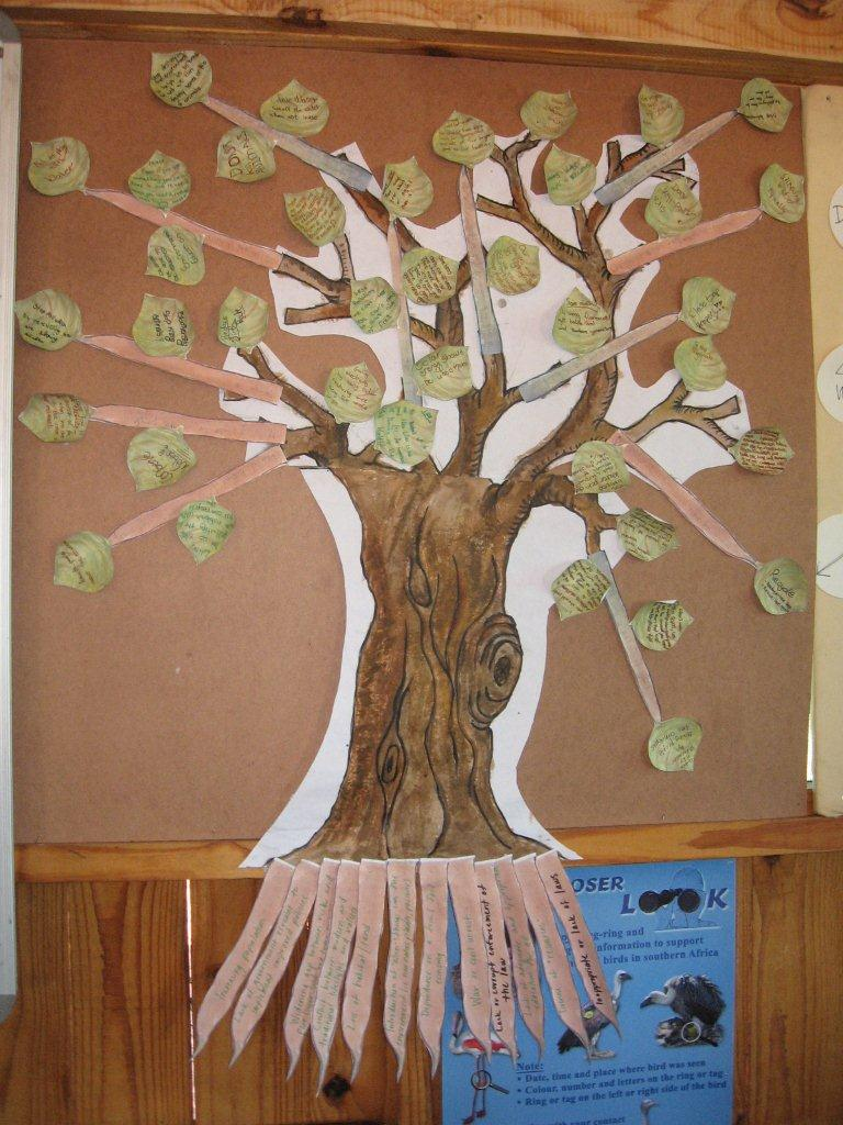 St George's College environmental problem tree